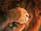 Аватар пользователя Lion