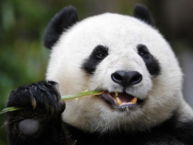 Аватар пользователя Panda